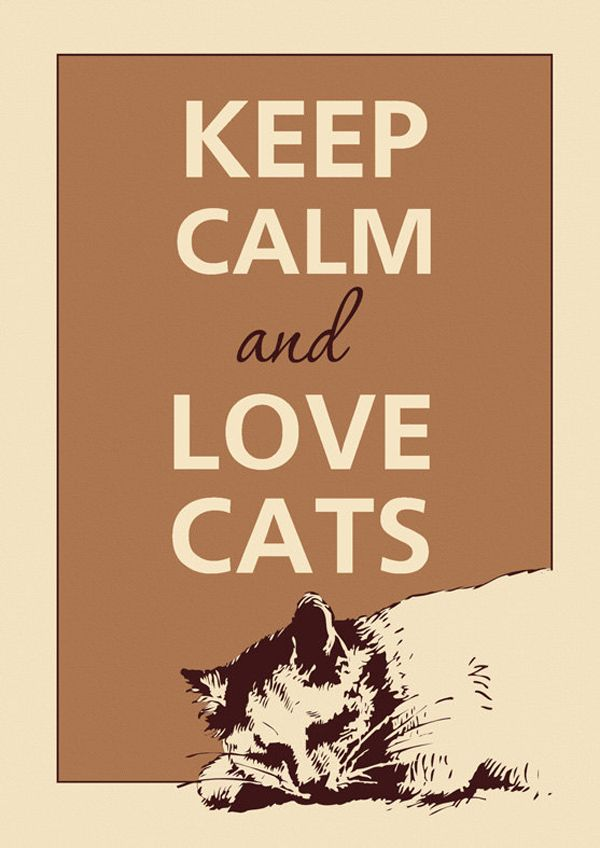 Perhaps the quintessential cat-ified version of the famous phrase is my favorite because it's so simple, yet true. There's absolutely nothing in the world that a cat can't fix, so when the going gets tough, remember that a little feline TLC is all you need to get through.