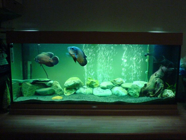 17 best ideas about fish aquarium decorations on pinterest for Aquarium decoration diy