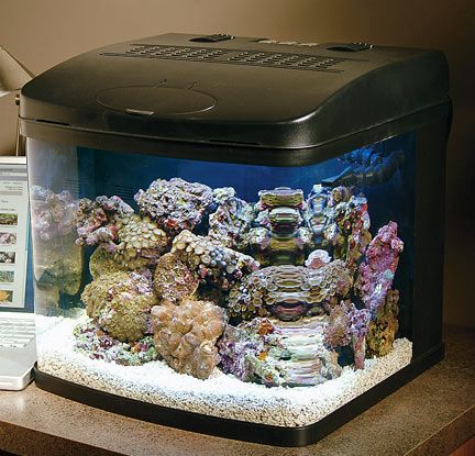 saltwater nano tanks - I want to do one of these with small clownfish in it.