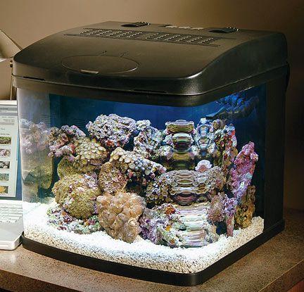 Best 25 Small Saltwater Tank Ideas On Pinterest Nano