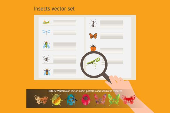 Insects vector set by Creativemaker on Creative Market