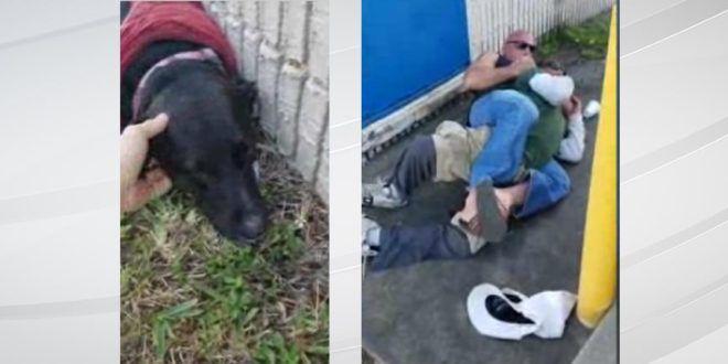 [VIDEO] USA: cintura nera di arti marziali blocca aguzzino che picchia un cane