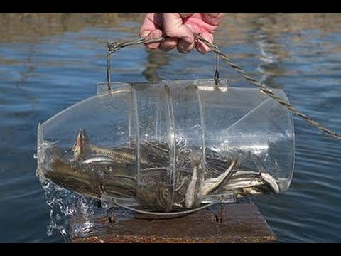 How to make a fish trap in 30 sec fish 30th and survival for Diy fish trap