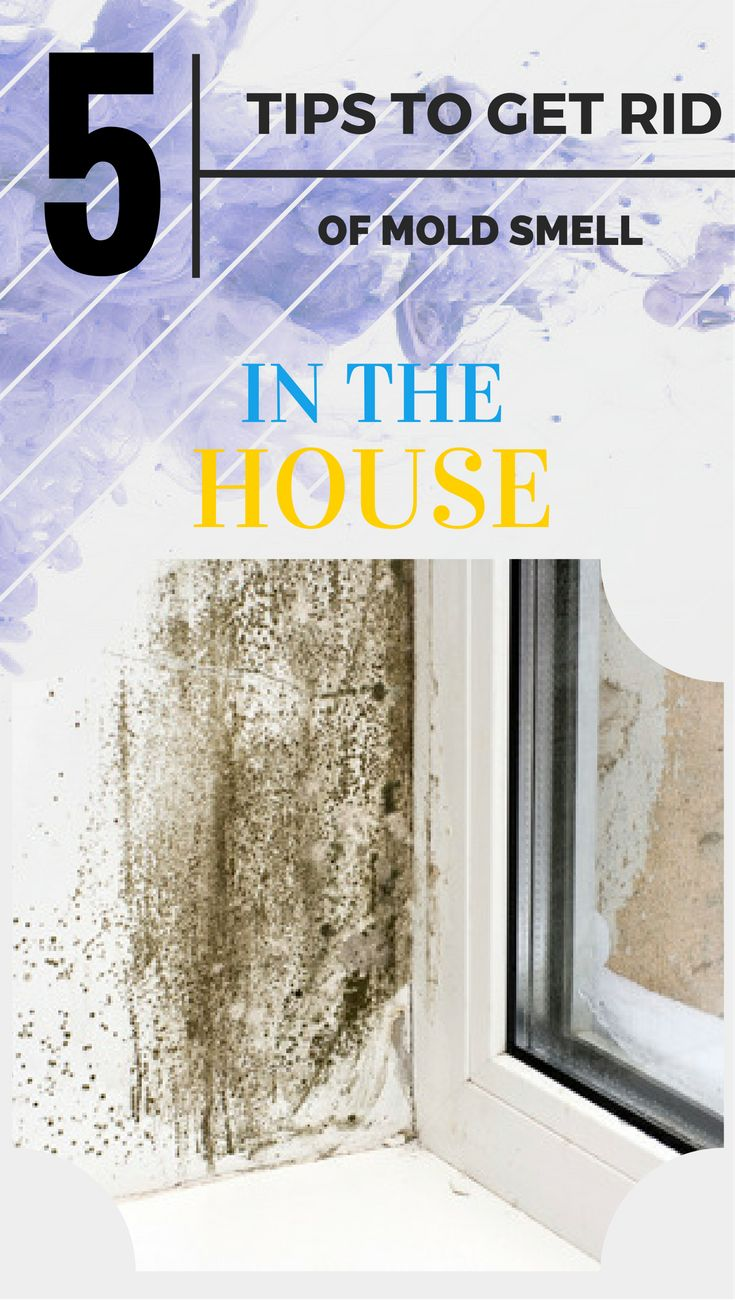 5 tips to get rid of mold smell in the house
