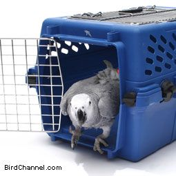Change Is Good For Pet Birds - How a pet bird owner deals with changes in their  life can affect how their pet bird deals with change from Birdtalk.com