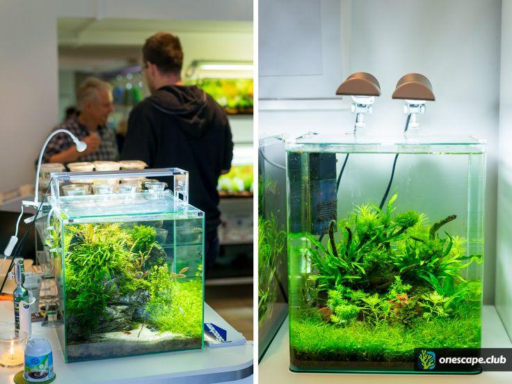 Besuch bei aqua! nano&more - onescape inside - onescape.club - Dein Meerwasser Forum, für Riffaquaristik, Aquascaping und Süßwasser Aquaristik