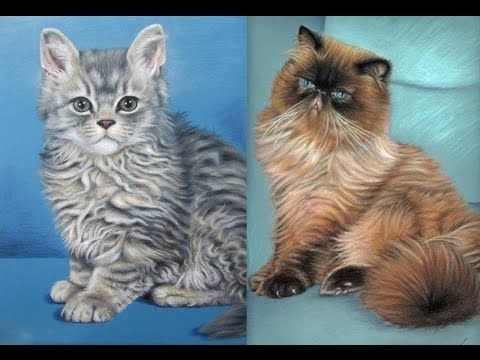 Arts & Cats: Katzen Zeichnen mit Nicole Zeug
