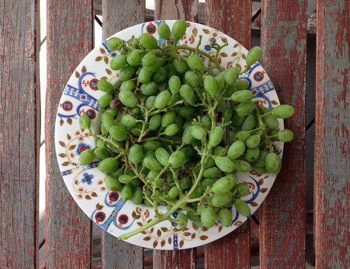 غوره و آب غوره plate of unripe grapes - a unique staple of Persian cuisine | full story of sour grapes and verjuice http://figandquince.com/2015/06/26/ghoreh-abghoreh-sour-grapes-verjuice/ @figandquince (Persian food blog)