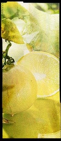 Like the four generations of Guerlains before him, Thierry Wasser selects the noblest and rarest raw materials from all over the world. KEY FRAGRANCE NOTES BERGAMOT IRIS VANILLA A stirring, bewitching blend of woody-amber sensual accents and flowers. An avant-garde fragrance, the first oriental fragrance in history.
