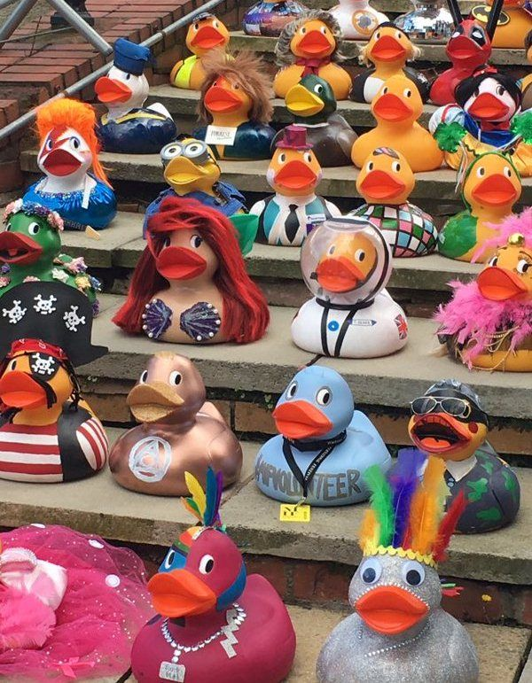 Braemar Estates' Ziggy Starduck competes in Manchester Duck Race 2016 | Braemar Estates