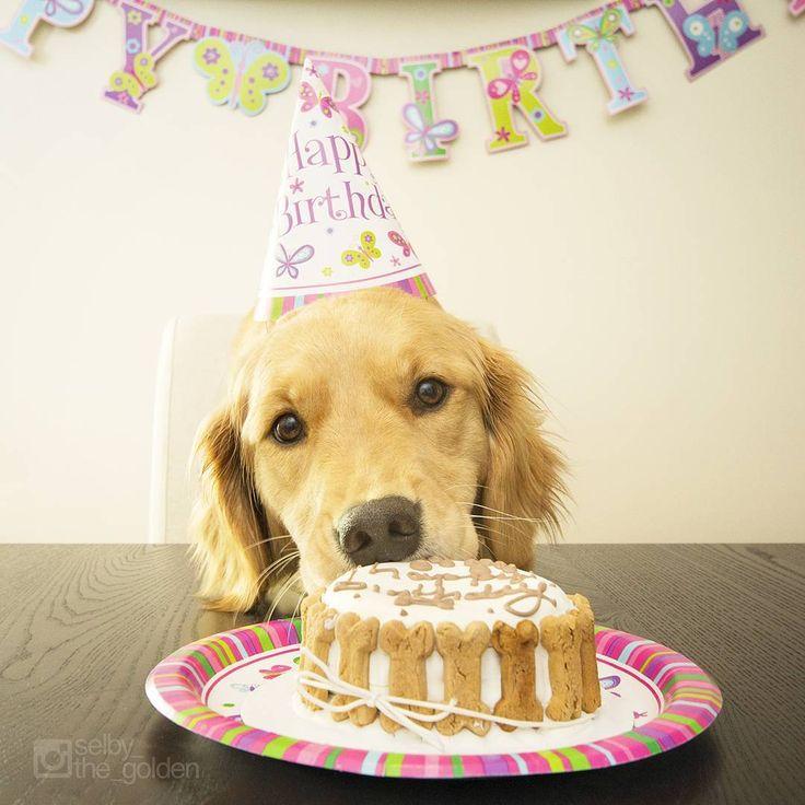 день рождения у собаки поздравление фото для вас