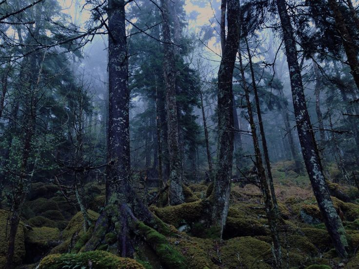 1141 best images about Forests on Pinterest | Trees ...