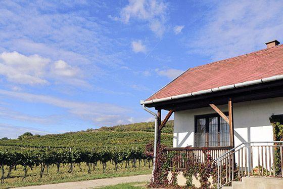Szedmák Winery - The Heart of the Kövesd Cellar Row