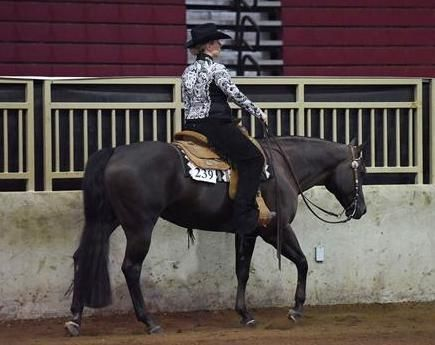'Bella' is a slow and steady Quarter Horse for sale on Equine.com!