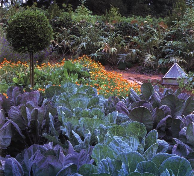 In summer the underlying plan of the potager at Ballymaloe Cookery School in Ireland is hidden beneath the panoply of vegetables, herbs and edible flowers. | kitchen garden | jardin potager: Kitchengarden, Edible Flower, Photo