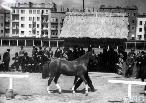 II Krajowa Wystawa Koni Lublin 1938- teren dzisiejszej Plazy