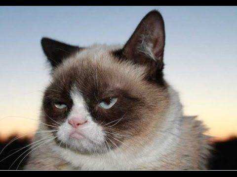 Крутая и смешная видео подборка приколов про кошек!  Кошки умницы и прирожденные комики!
