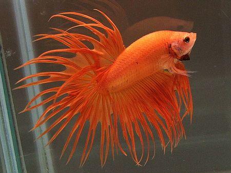 1000 images about planted aquarium on pinterest fresh for Aquarium poisson eau froide