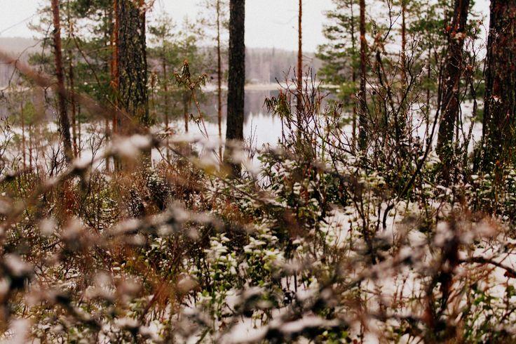 Forest, Virrat, Finland