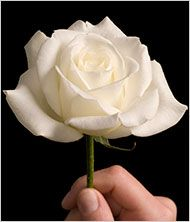 """""""From Kind Words, Lessons on Condolences"""" -- How to comfort others in the time of death."""