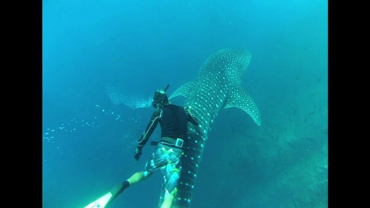 Whale Shark Encounter.... #underwaterphotography #nature #ocean #blueocean #photography #wild #diving #scuba