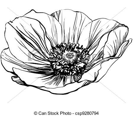 A Black And White Picture Poppy Flower Eps Vector