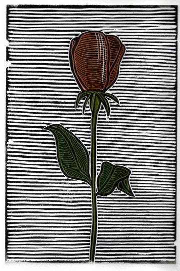 27 Best Rosas Images On Pinterest