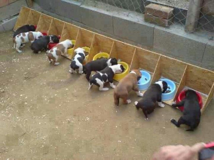 "Kennel Idea - great for helping them learning not to ""guard"" or ""scarf"" their food!"