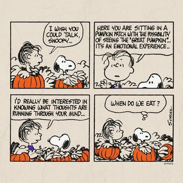 It's The Great Pumpkin Charlie Brown Quotes Fascinating 93 Best It's The Great Pumpkin Charlie Brown Images On Pinterest