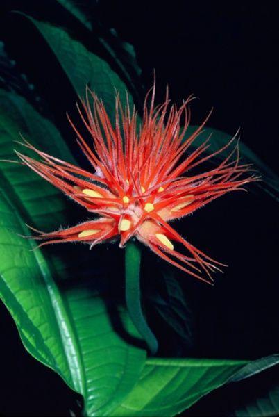 53 Best Opvallende Bloemen En Planten Images On Pinterest
