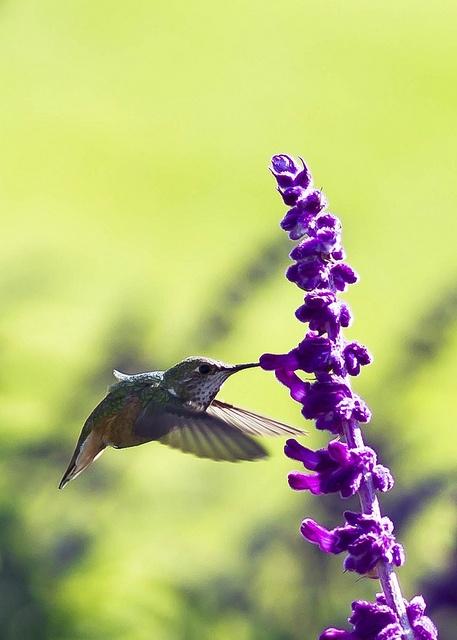 Hummingbird hits the target