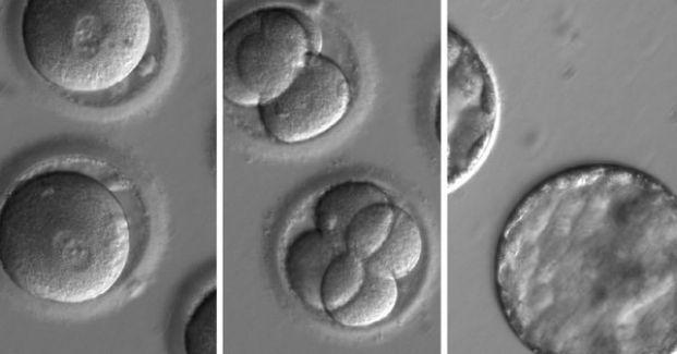 #Tijeras moleculares para corregir genes, la medicina atrapada entre la esperanza y el debate ético - Diario NORTE: La Prensa (Nicaragua)…
