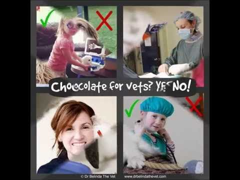 Chocolate for pets? No! Chocolate for vets? Yes!