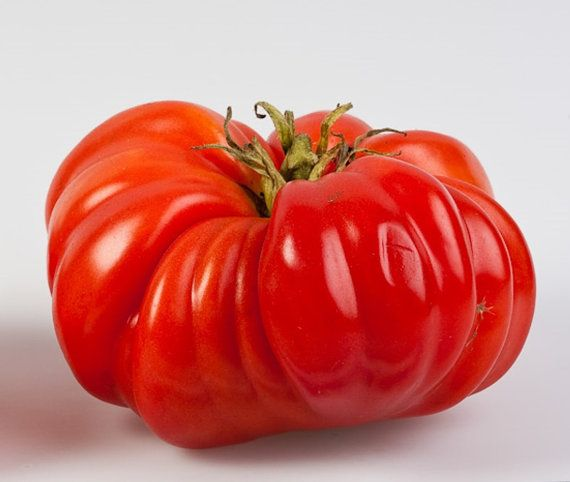 Organic Mr. Ugly Beefsteak Tomato Seeds - 20 Count  Lycopersicon lycopersicum    Tomato Type: Specialty  Breed: Hybrid  Origin: USA  Season: Late  Leaf Type: Normal  Plant Type: Indeterminate  Plant Height: 6 ft.  Fruit Size: 10 oz.  Fruit Shape: Beefsteak  Skin Color: Red  Flesh Color: Red  Disease Resistance: Verticillium Wilt, Fusarium Wilt Race 1, Nematodes  Comments: large shoulders  Days to Germination: 7 - 10 days depending upon methods, sunlight, water, and other factors.  Sun…