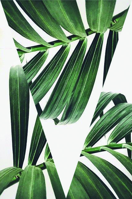 Fern leafs #letsgoallbotanical