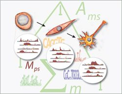 Systems biology meets epigenetics: A computational model explains epigenome dynamics during differentiation    Read more at: http://phys.org/news/2012-12-biology-epigenetics-epigenome-dynamics-differentiation.html#jCp
