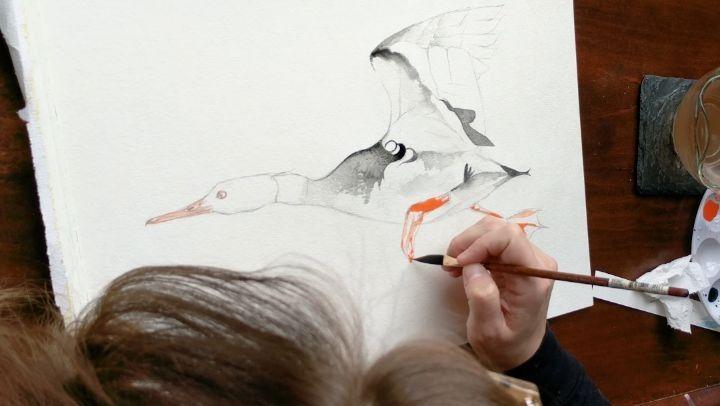 Merganser WIP. Watch me paint at youtube.com/catgraff #subscribe #like #Merganser #duck #bird #wings #paint #video #watch #artist #wip #diy #process #art #watercolour #watercolor #illustration #tunes #sound #demo #googlepixel #expression #mood #speedpaint #speedpainting #timelapse #sounds #sound #ambient @strathmoreart @staedtlermars #strathmoreart #catgraff
