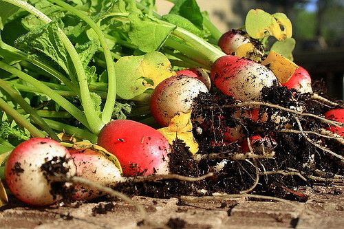 40 fruits and vegetables that grow well in shade.
