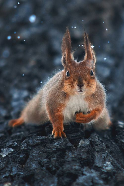 """Squirrel:  """"Are you referring to me?!"""""""