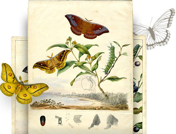 The Art of Science App: Butterfly and Moth Paintings