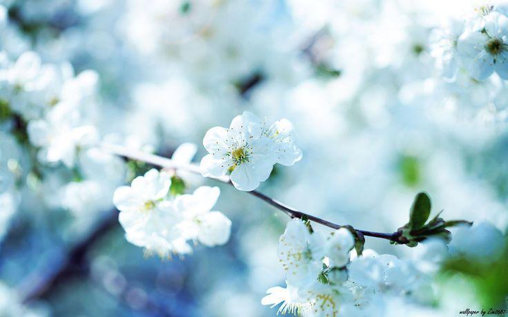 flower wallpaper. Read full article: http://webneel.com/wallpaper/19-flower-wallpaper | more http://webneel.com/wallpaper/flowers | Follow us www.pinterest.com/webneel