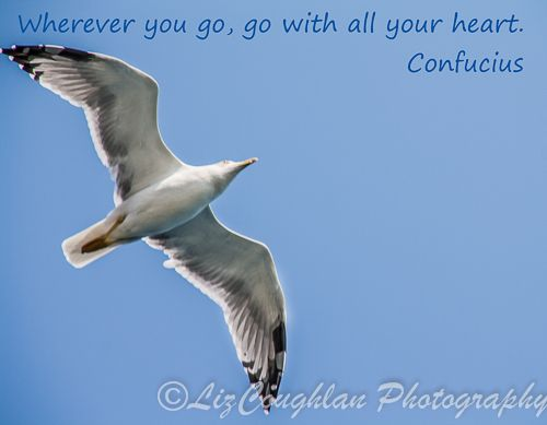 """""""Wherever you go, go with all your heart."""" Confusious"""