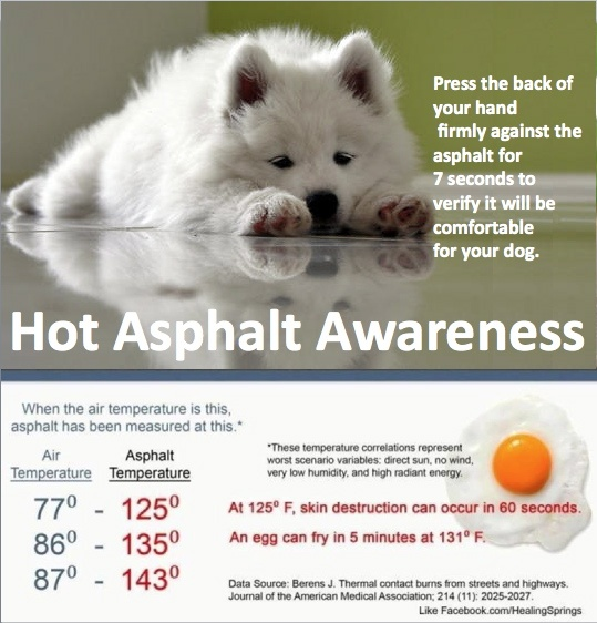 hot sidewalks, streets and paths can hurt your dog