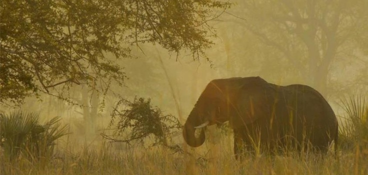 The Gorongosa Lion Project team heard lions but they found elephants (Photo by Jeff Reed)  http://on.fb.me/QU0Bj5