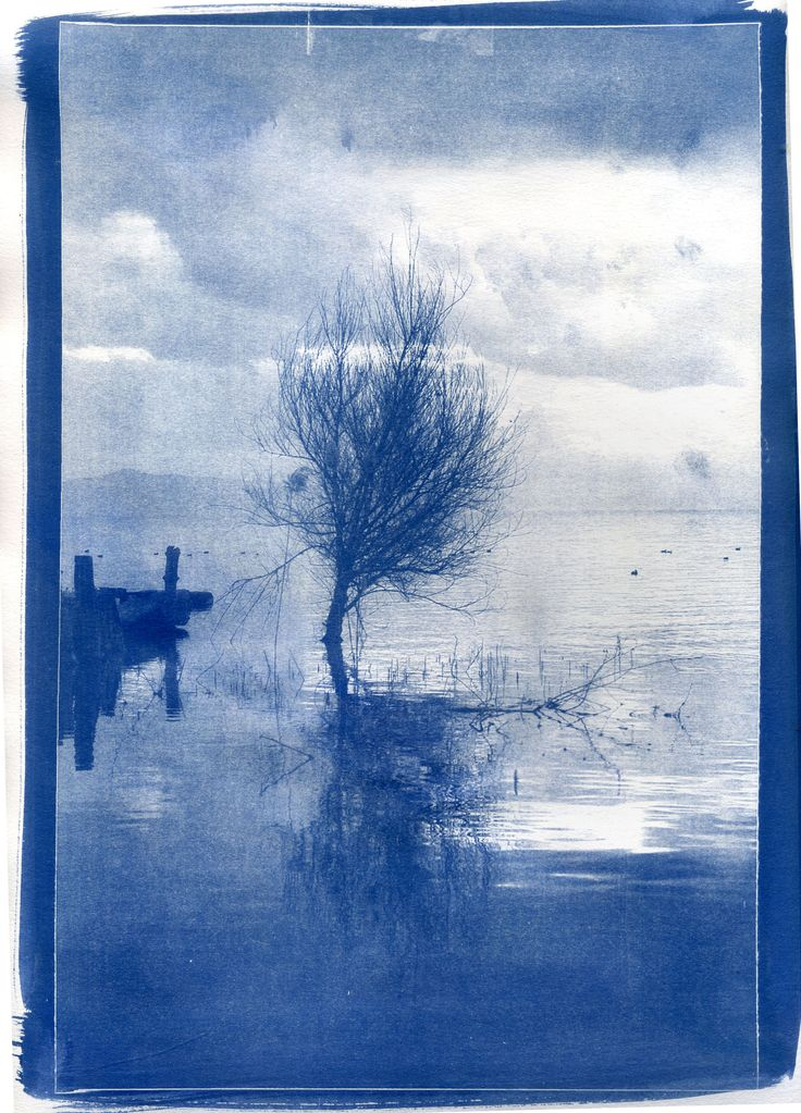 Cianotipia - dimensioni 24x30 #cianotipia #cyanotype #sunprint #alternativephotography