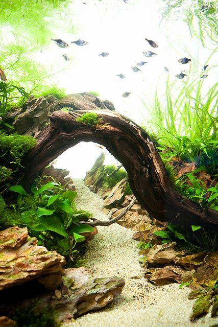 "I love ""walkways"" in fish tanks and I know we're doing sand so I'm going to buy some beautiful, flat, smooth stones for a walkway but a bridge over it would be insanely beautiful"