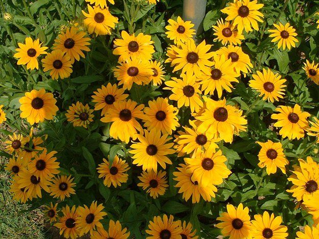 Image Result For Central Fl Gardening August