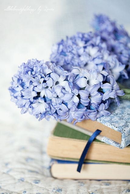 .: Iphone Backgrounds, Sweet, Blue, Flowers Power, Reading Books, Baskets, Photo, Hydrangeas, Books Flowers
