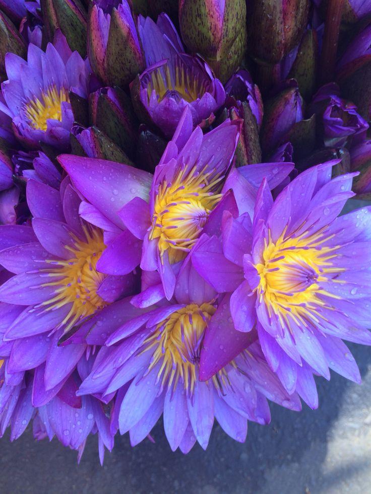 Lotus for Buddah