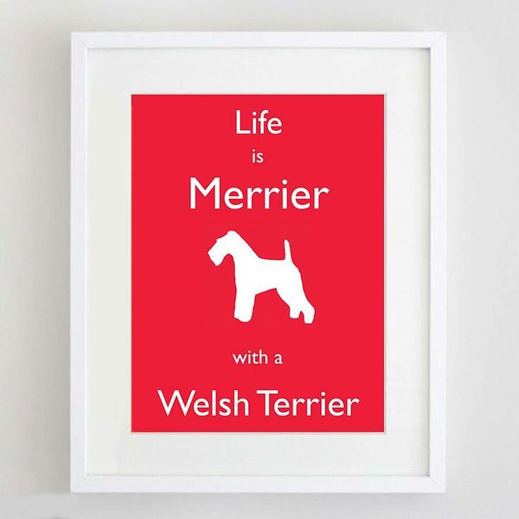 Welsh Terrier Print